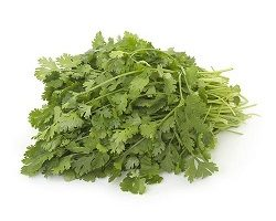 Coriander Leaves - Organically Grown,